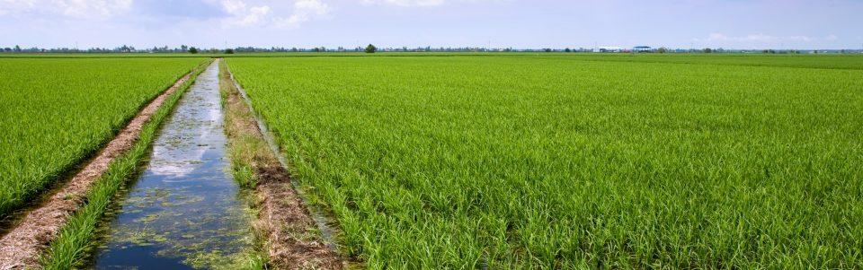 تصفیه و تولید آب کشاورزی